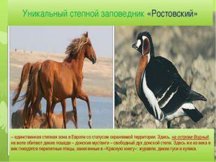 Уникальный степной заповедник «Ростовский» – единственная степная зона в Евро