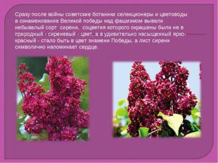 Cразу после войны советские ботаники селекционеры и цветоводы в ознаменование