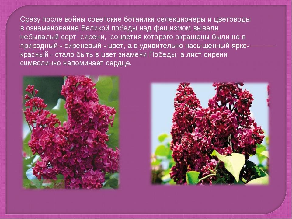 Cразу после войны советские ботаники селекционеры и цветоводы в ознаменование...