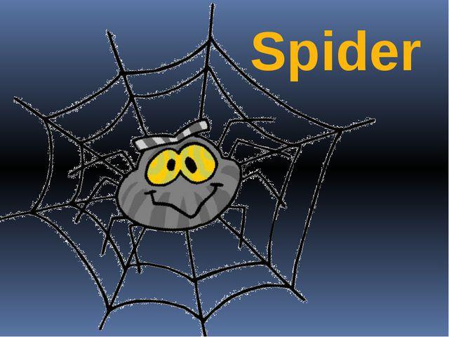 Spider Автор: Евдокимова А.В.