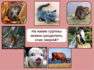 На какие группы можно разделить этих зверей?