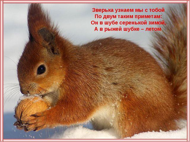 Зверька узнаем мы с тобой По двум таким приметам: Он в шубе серенькой зимой,...