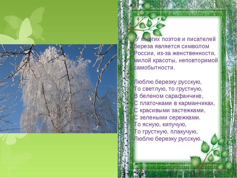 У многих поэтов и писателей береза является символом России, из-за женственн...