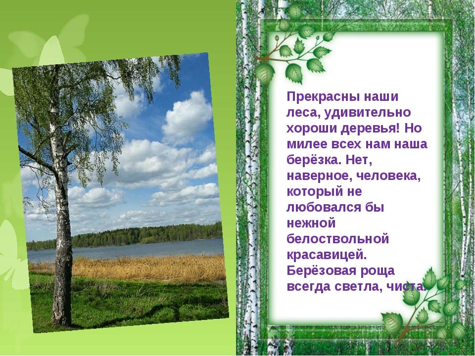 Прекрасны наши леса, удивительно хороши деревья! Но милее всех нам наша берёз...