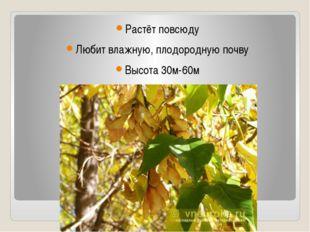 Растёт повсюду Любит влажную, плодородную почву Высота 30м-60м Существует 10