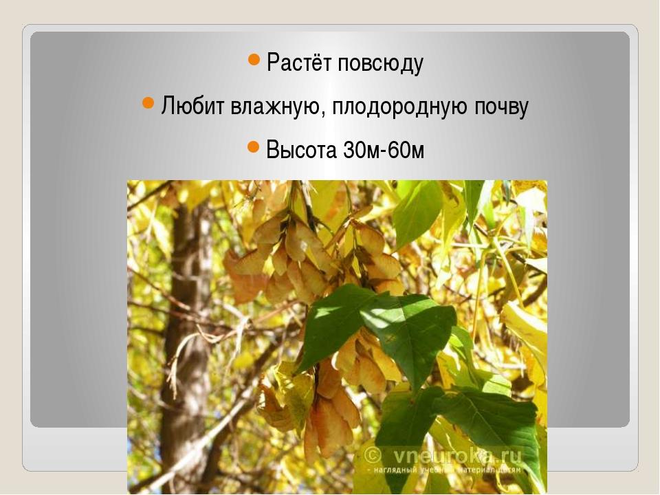 Растёт повсюду Любит влажную, плодородную почву Высота 30м-60м Существует 10...