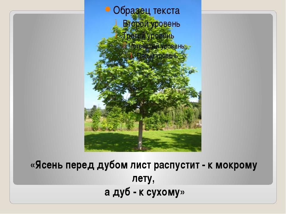 «Ясень перед дубом лист распустит - к мокрому лету, а дуб - к сухому»