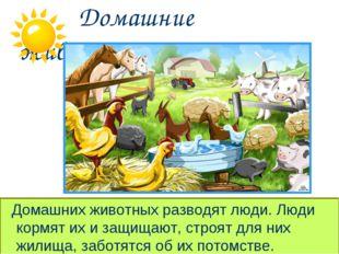 Домашние животные. Домашних животных разводят люди. Люди кормят их и защищаю