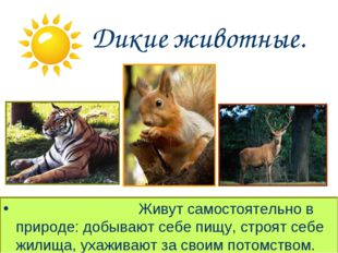 Дикие животные. Живут самостоятельно в природе: добывают себе пищу, стро
