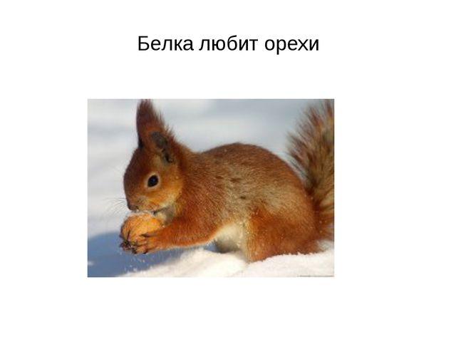 Белка любит орехи