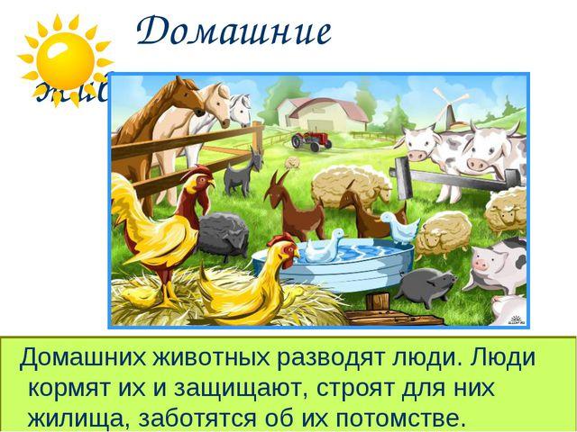 Домашние животные. Домашних животных разводят люди. Люди кормят их и защищаю...