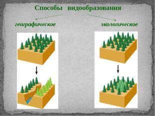 Способы видообразования географическое экологическое Образование видов опреде
