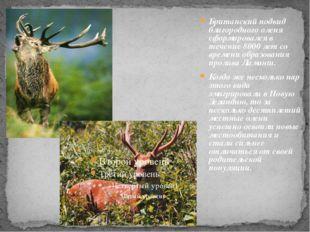 Британский подвид благородного оленя сформировался в течение 8000 лет со вре