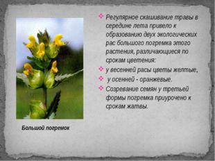 Регулярное скашивание травы в середине лета привело к образованию двух эколог