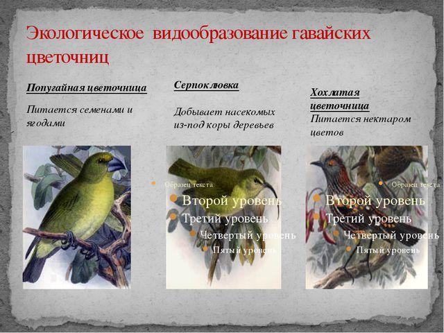 Экологическое видообразование гавайских цветочниц Попугайная цветочница Питае...