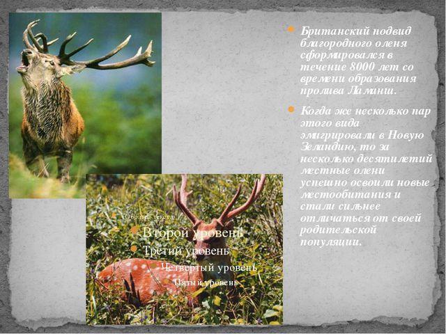 Британский подвид благородного оленя сформировался в течение 8000 лет со вре...