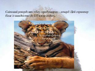 Світовий рекордсмен з бігу серед тварин – гепард. Цей спринтер бігає із швидк
