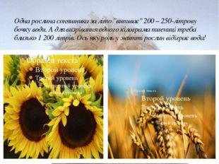 """Одна рослина соняшника за літо """"випиває"""" 200 – 250-літрову бочку води. А для"""