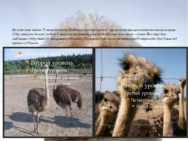 На землі живе майже 75 мільярдів птахів. Найбільші серед них страуси. Окремі...