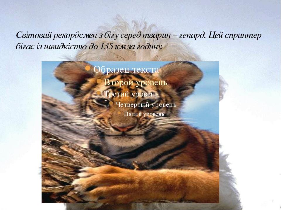 Світовий рекордсмен з бігу серед тварин – гепард. Цей спринтер бігає із швидк...