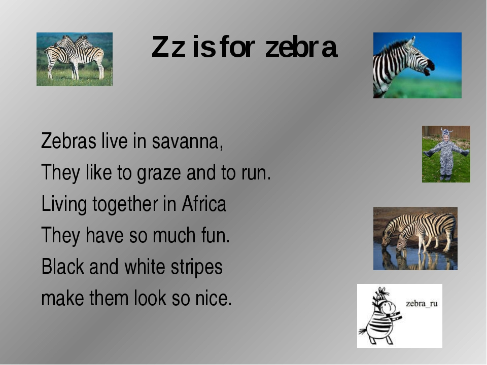 Zz is for zebra Zebras live in savanna, They like to graze and to run. Living...