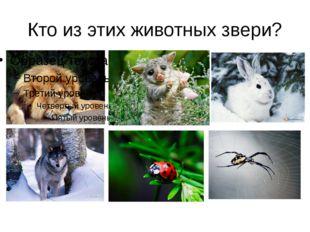 Кто из этих животных звери?