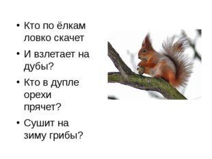 Кто по ёлкам ловко скачет И взлетает на дубы? Кто в дупле орехи прячет? Сушит