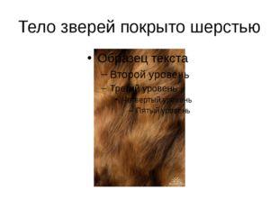 Тело зверей покрыто шерстью
