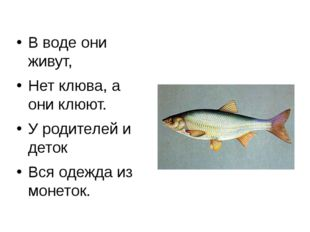 В воде они живут, Нет клюва, а они клюют. У родителей и деток Вся одежда из м