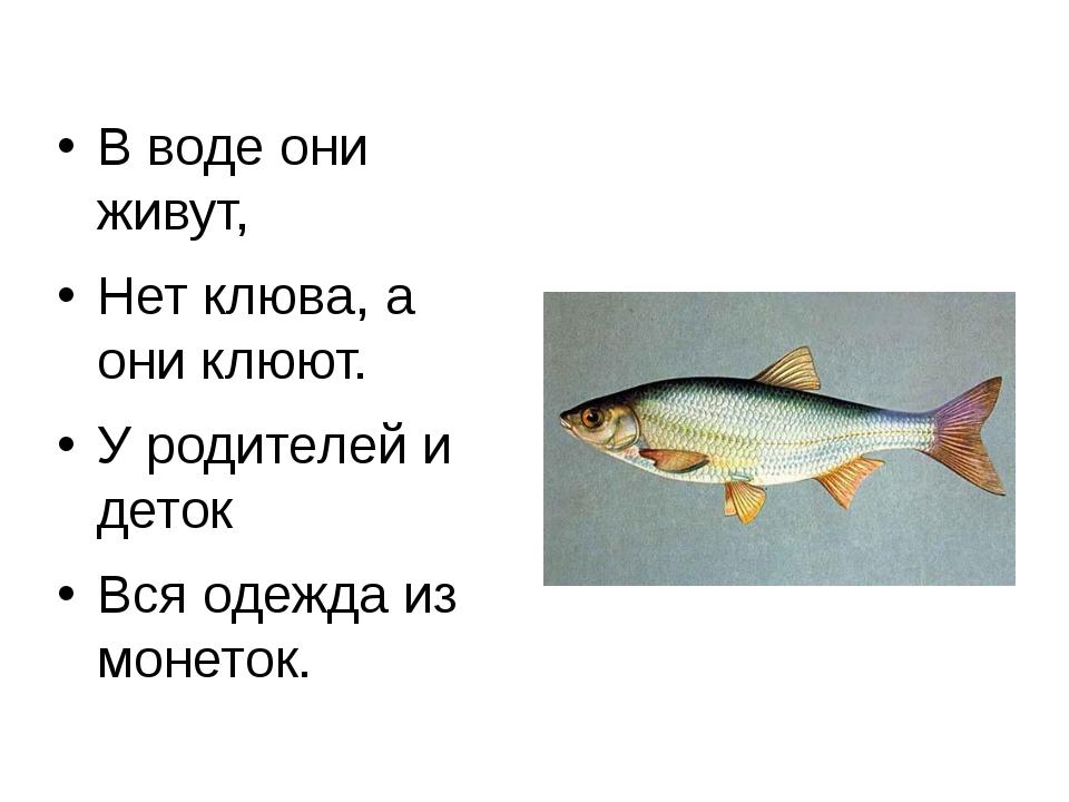 В воде они живут, Нет клюва, а они клюют. У родителей и деток Вся одежда из м...