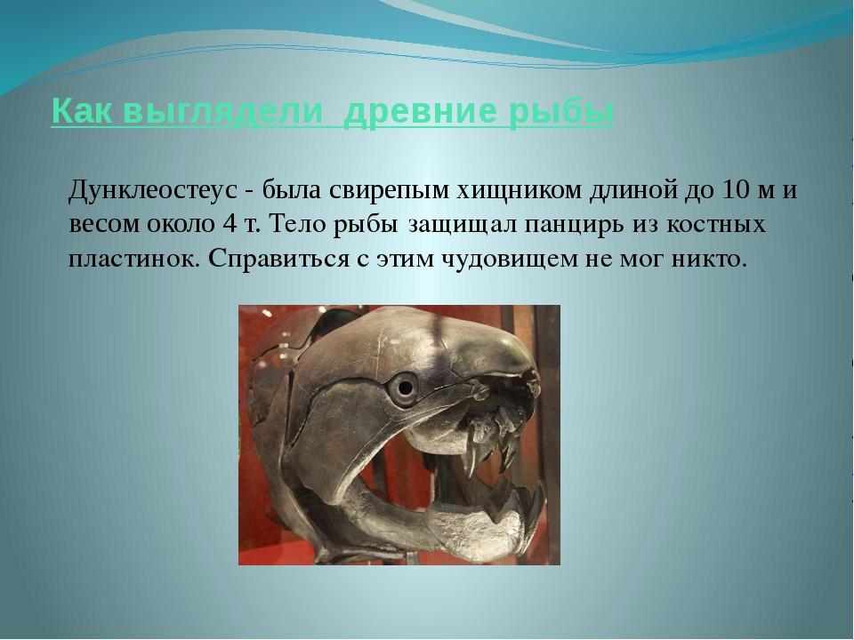 Как выглядели древние рыбы Дунклеостеус - была свирепым хищником длиной до 10...