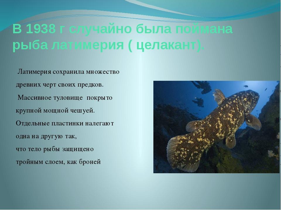В 1938 г случайно была поймана рыба латимерия ( целакант). Латимерия сохранил...