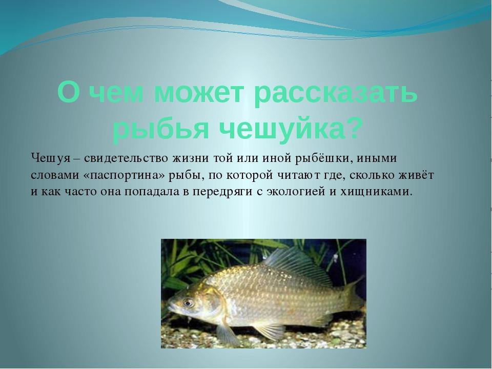 О чем может рассказать рыбья чешуйка? Чешуя – свидетельство жизни той или ино...