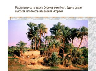 Растительность вдоль берегов реки Нил. Здесь самая высокая плотность населени