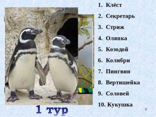 Клёст Секретарь Стриж Оляпка Козодой Колибри Пингвин Вертишейка Соловей Кукуш