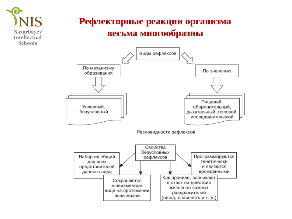 Схема рефлексов условного и безусловного