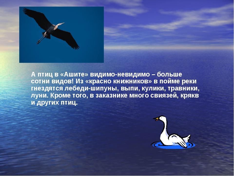 А птиц в «Ашите» видимо-невидимо – больше сотни видов! Из «красно книжников»...