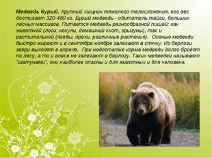 Медведь бурый.Крупный хищник тяжелого телосложения, его вес достигает 320-48