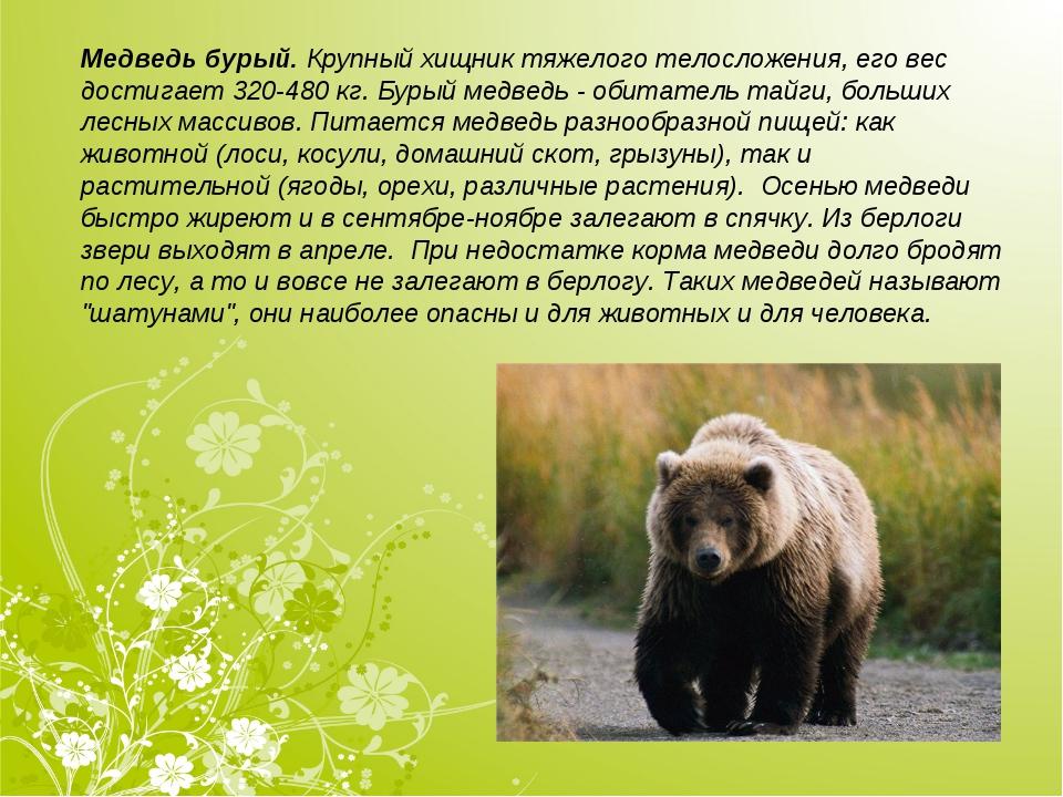 Медведь бурый.Крупный хищник тяжелого телосложения, его вес достигает 320-48...