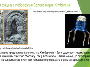 Вендская фауна с побережья Белого моря. Kimberella http://www.ucmp.berkeley.e