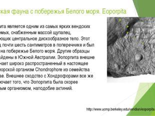 Вендская фауна с побережья Белого моря. Eoporpita Эопорпита является одним из