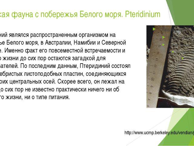Вендская фауна с побережья Белого моря. Pteridinium Птеридиний являлся распро...