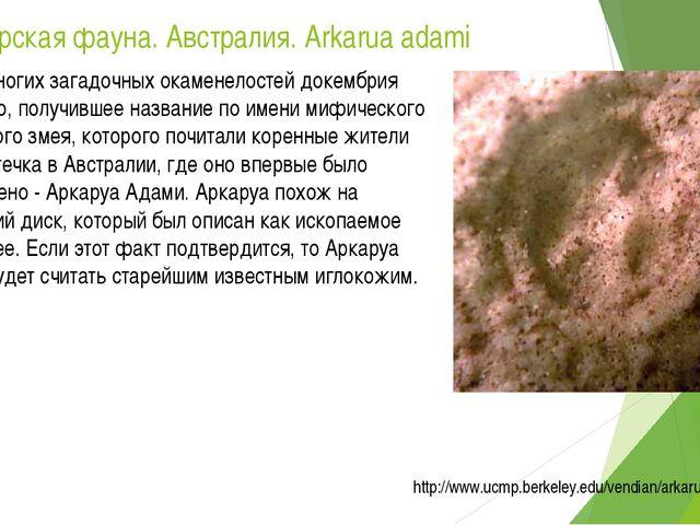 Эдиакарская фауна. Австралия. Arkarua adami Среди многих загадочных окаменело...