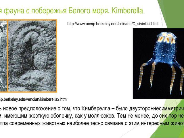 Вендская фауна с побережья Белого моря. Kimberella http://www.ucmp.berkeley.e...