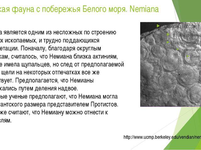 Вендская фауна с побережья Белого моря. Nemiana Немиана является одним из нес...