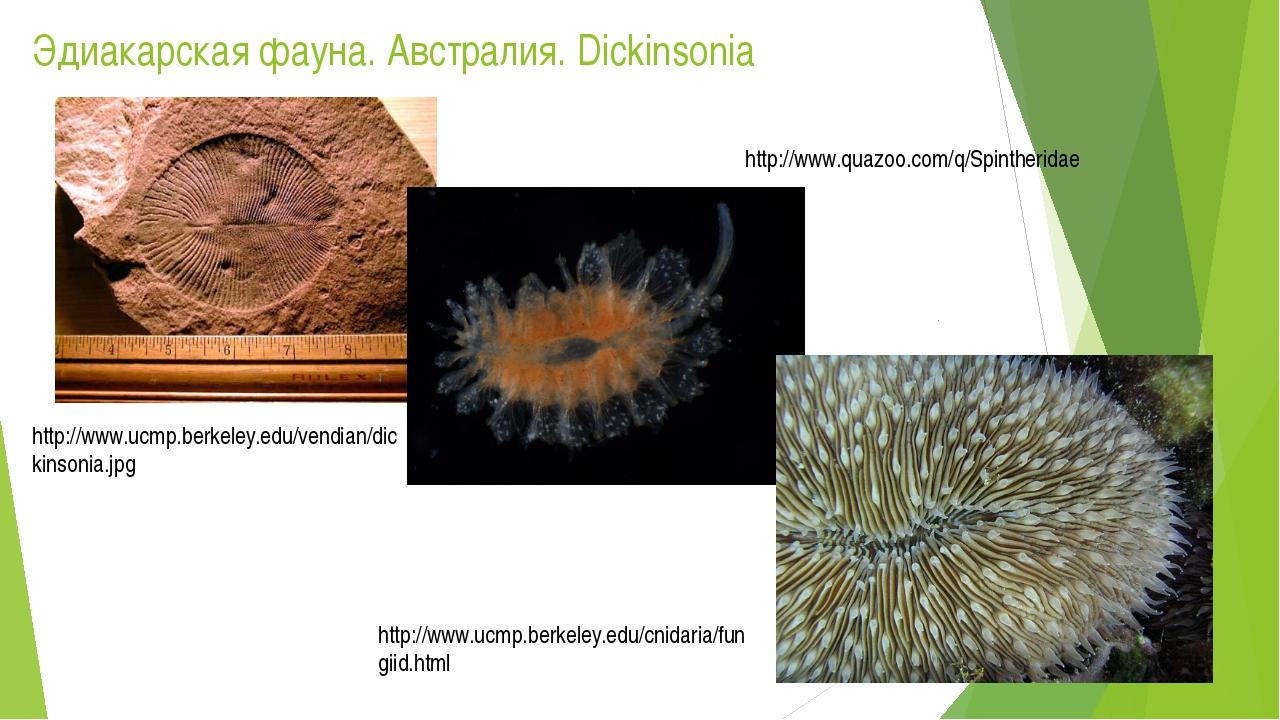 Эдиакарская фауна. Австралия. Dickinsonia http://www.ucmp.berkeley.edu/vendia...