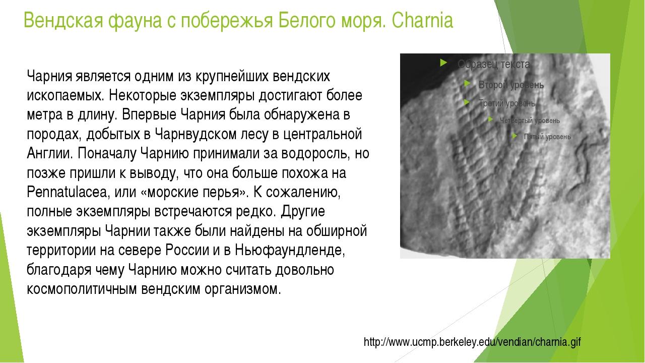Вендская фауна с побережья Белого моря. Charnia Чарния является одним из круп...
