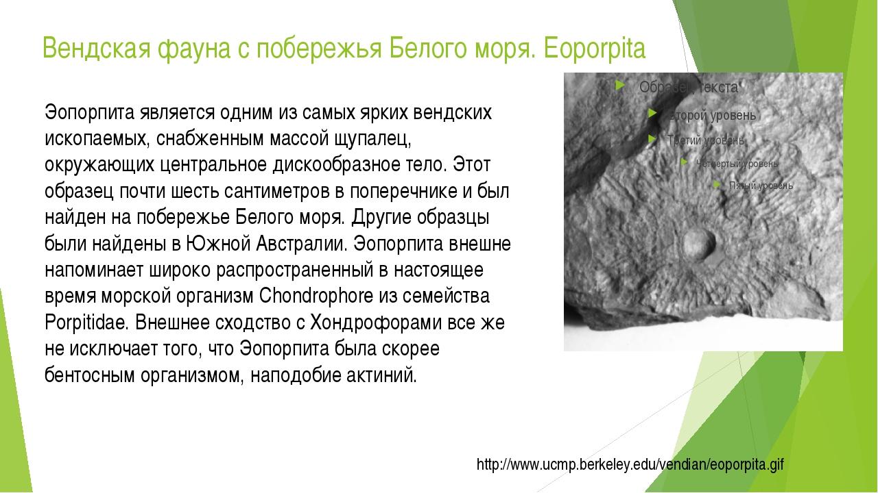 Вендская фауна с побережья Белого моря. Eoporpita Эопорпита является одним из...