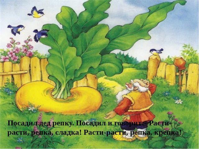 Посадил дед репку. Посадил и говорит:- Расти-расти, репка, сладка! Расти-раст...
