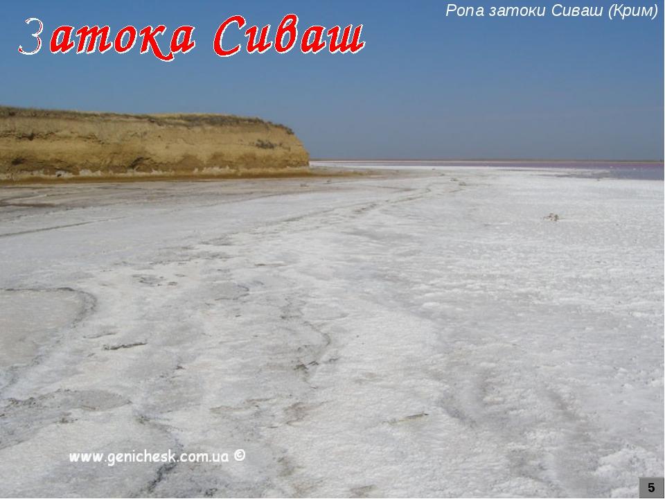 Ропа затоки Сиваш (Крим) 5